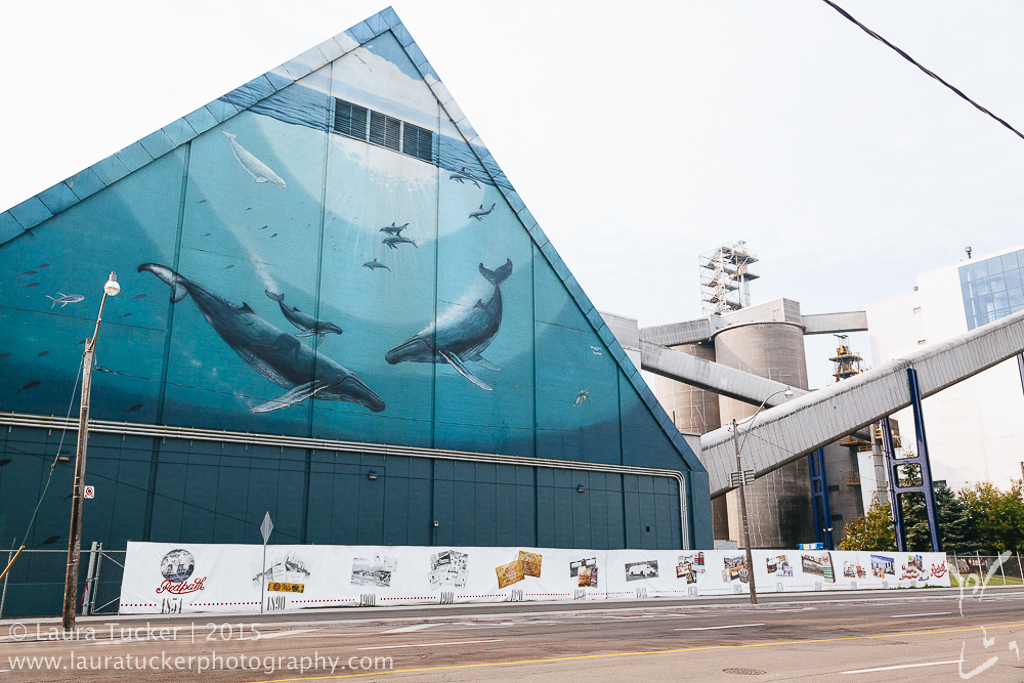Toronto Mural by Wyland photographed by Laura Tucker