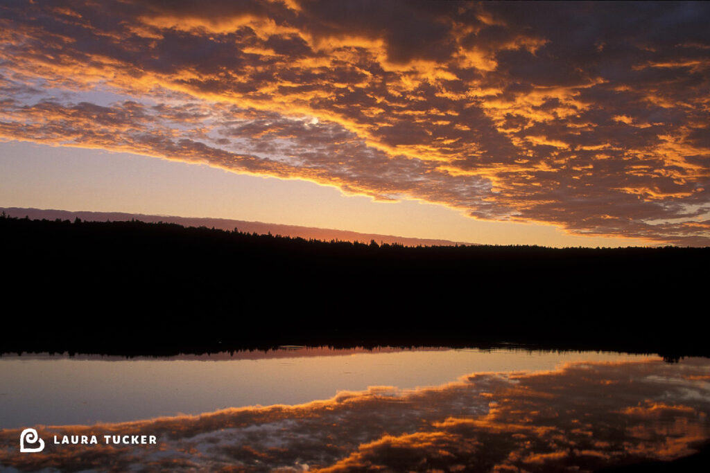 Sunrise and the Inner Critic - Laura Tucker